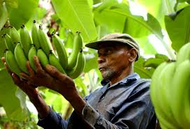 Image result for fairtrade farmers