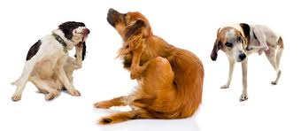 Vet Advice: Relief for Your <b>Dog's</b> Itchy Skin | The Bark