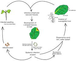 Pathogen Chart Plant Pathology Wikipedia