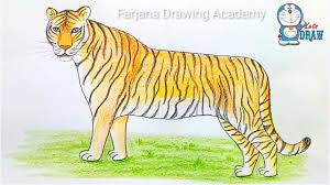 tiger drawing pictures. Plain Drawing How To Draw A Tiger Step By For Tiger Drawing Pictures O