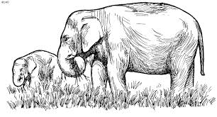 Small Picture Elephant Coloring Pages Kids Website For Parents