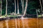 imagem de Colares Pará n-14