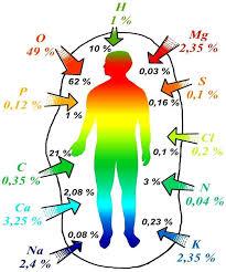 Баланс микроэлементов в организме Как похудеть баланс микроэлементов в организме