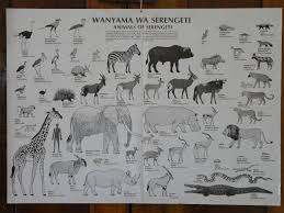 African Animals Chart Animal Identification Chart A Very