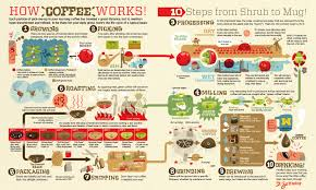 Coffee Production Process Flow Chart Pineapple Bananas And Coffee Jackie Ecological