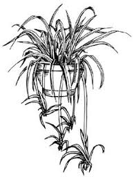 how to draw a palm in 5 steps flower images Low Maintenance Houseplants how to draw low maintenance house plants pictures