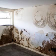 Mould U2014 Mouldy Smell Or Signs Of Mould Growth On Internal Decoration.