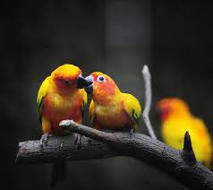 Love Birds wallpaper by jonh2ce - b7 ...