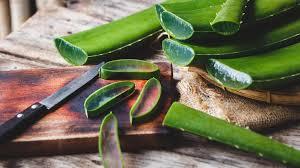 Aloe vera: 8 health benefits
