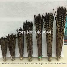 wholesale! Sale <b>50pcs Natural Pheasant Feather</b> 20 22 inches / 50 ...