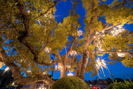 chandelier tree view all photos