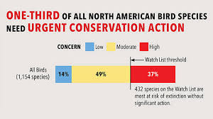 More Than 1 3 Of North American Bird Species At Risk Of
