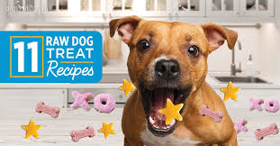 our top 11 raw dog treat recipes