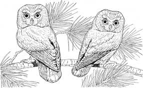 Small Picture Coloring Page Barn Owl Coloring Pages For Adults hermesboardcom