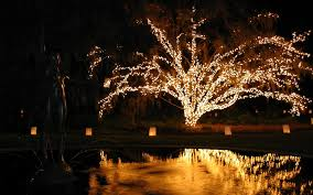 Kelso Christmas Lights Christmas Lights 2020 2021 In South Carolina Dates Map