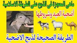 الطريقة الصحيحة لذ بح أضحية عيد الاضحى و شروط الاضحية ما هى المعجزة فى الذ  بح على الطريقة الاسلامية - YouTube