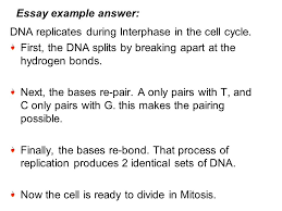 genetics ppt 41 essay example answer dna