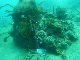 Sea Sea Ys 03 Universal Lighting System Sea Thru Brings Clarity To Underwater Photos Scientific