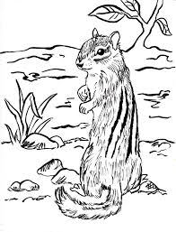 Small Picture Chipmunk Coloring Page Samantha Bell