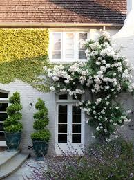 Best 25 Trellis Ideas Ideas On Pinterest  Trellis P Garden And Climbing Plant Trellis