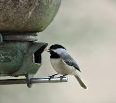 Be A Part Of The Great Backyard Bird Count  The Apopka VoiceBackyard Bird Watch