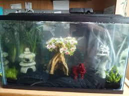 beta fish aquarium
