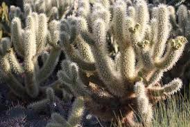 desert plants with names. Delighful Plants Desert Plants In The Western United States And Northern Mexico During Focus  On Nature Tours For With Names