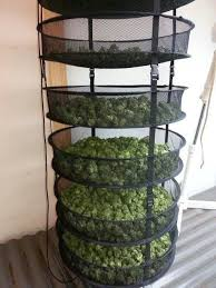 Cannabis Drying Rack