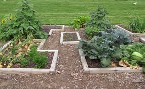 The Kitchen Garden Garden Fancy The Kitchen Garden 2014