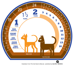 Cat Age Chart What Is My Cats Age In Human Years Paws One