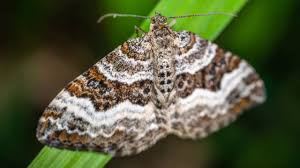 Why Are Moths Drawn To Light Sporcle Blog