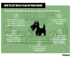 make fleas go away on your pet within 30 minutes you can feed the pill to your pet ly however it is not a long term remedy so keep that in mind