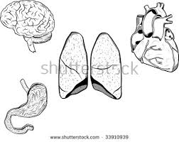 Small Picture Human Heart Coloring Pages
