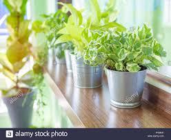 Grüne Frische Pflanzen In Blechdose Auf Hölzernen Regal In Der Nähe