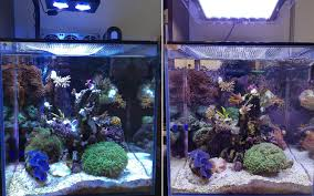 tank before on the left with a hydra tank on the right after with gnc