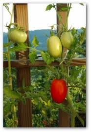 100 Best Ideas For A Suburban Garden Images On Pinterest Container Garden Plans Tomatoes