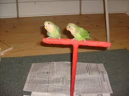 picture of t shaped bird training stand