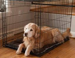 Kong Crate Size Chart Choosing The Right Dog Crate Size The Definitive Guide