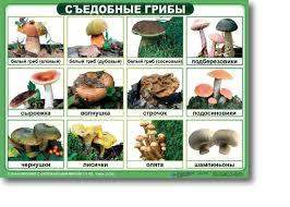 Реферат на тему съедобные грибы > решено и закрыто Реферат на тему съедобные грибы