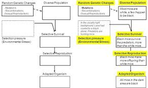 Week 15 Natural Selection Project Kreiselman Biology