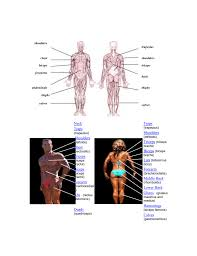 Muscle Chart Inspired By Julie Personal Training