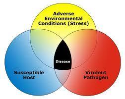 Mardel Fish Disease Chart Fish Disease Index Prevention And Detection Aquarium Advice