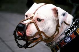 Kuvahaun tulos haulle amerikanbulldoggi