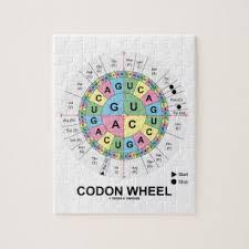 Amino Acid Wheel Toys And Games Zazzle