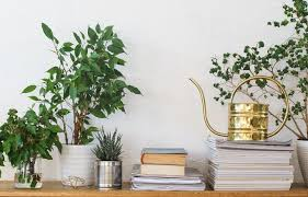See more ideas about plants, wall mounted planters, hanging plants. 10 Creative Hacks To Add Plants To Your Small Space Huffpost Life