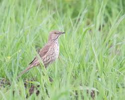 Rare Bird Alert: June 14, 2019 « ABA Blog