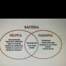 Bacteria And Viruses Venn Diagram The Venn Diagram Details Some Of The Helpful And Harmful