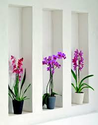 plants feng shui home layout plants. Feng Shui Plants For Harmony And Positive Energy In The Living Room Home Layout O