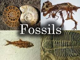 Image result for fossils