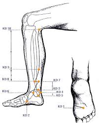 Leg Acupressure Points Chart How Do Acupuncturist Choose Acupuncture Points
